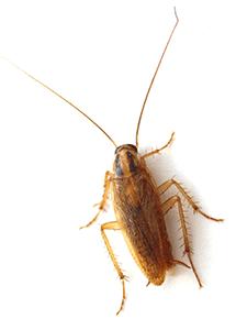 Best Pest Control OKC
